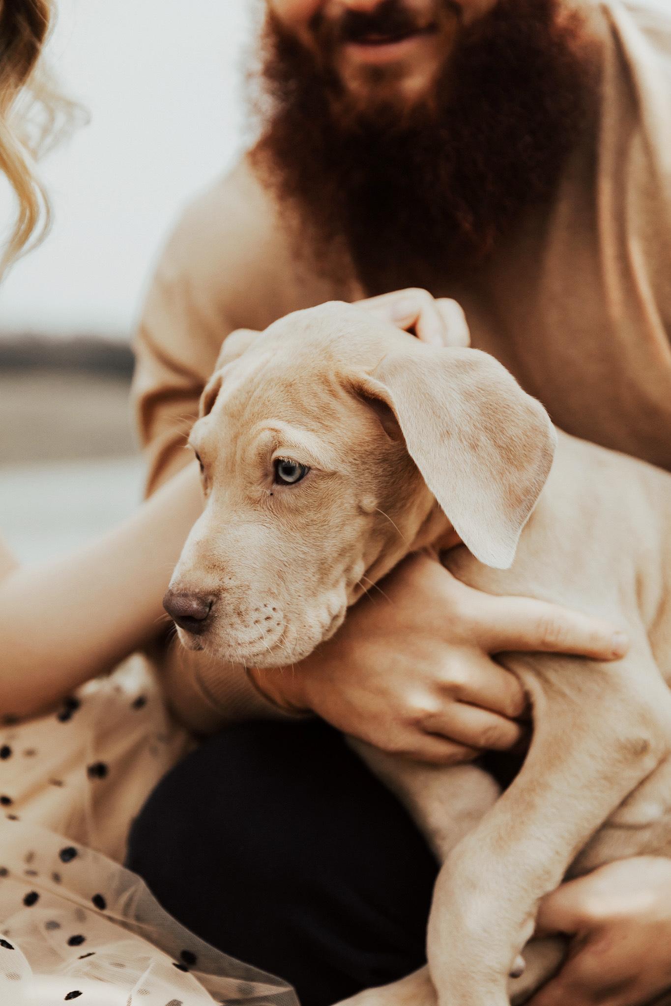 great dane puppy photos